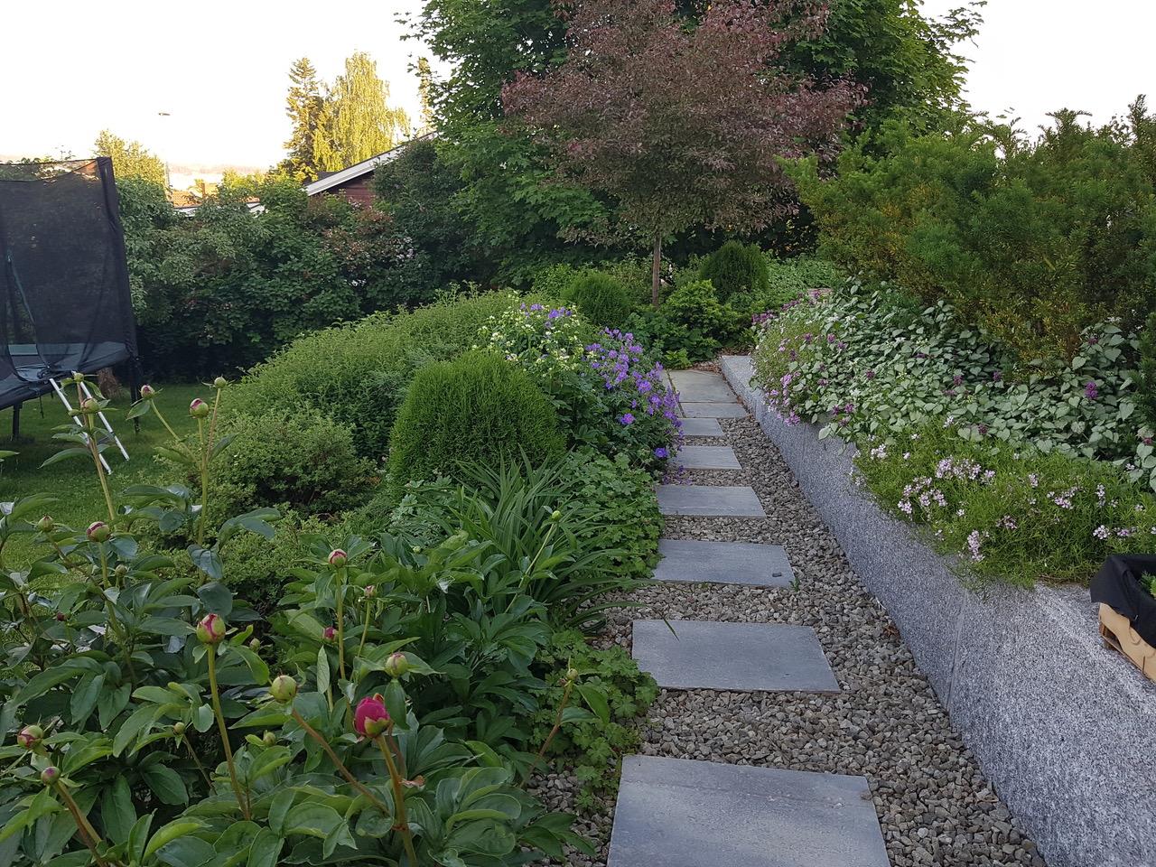 frodig vekst i hagen