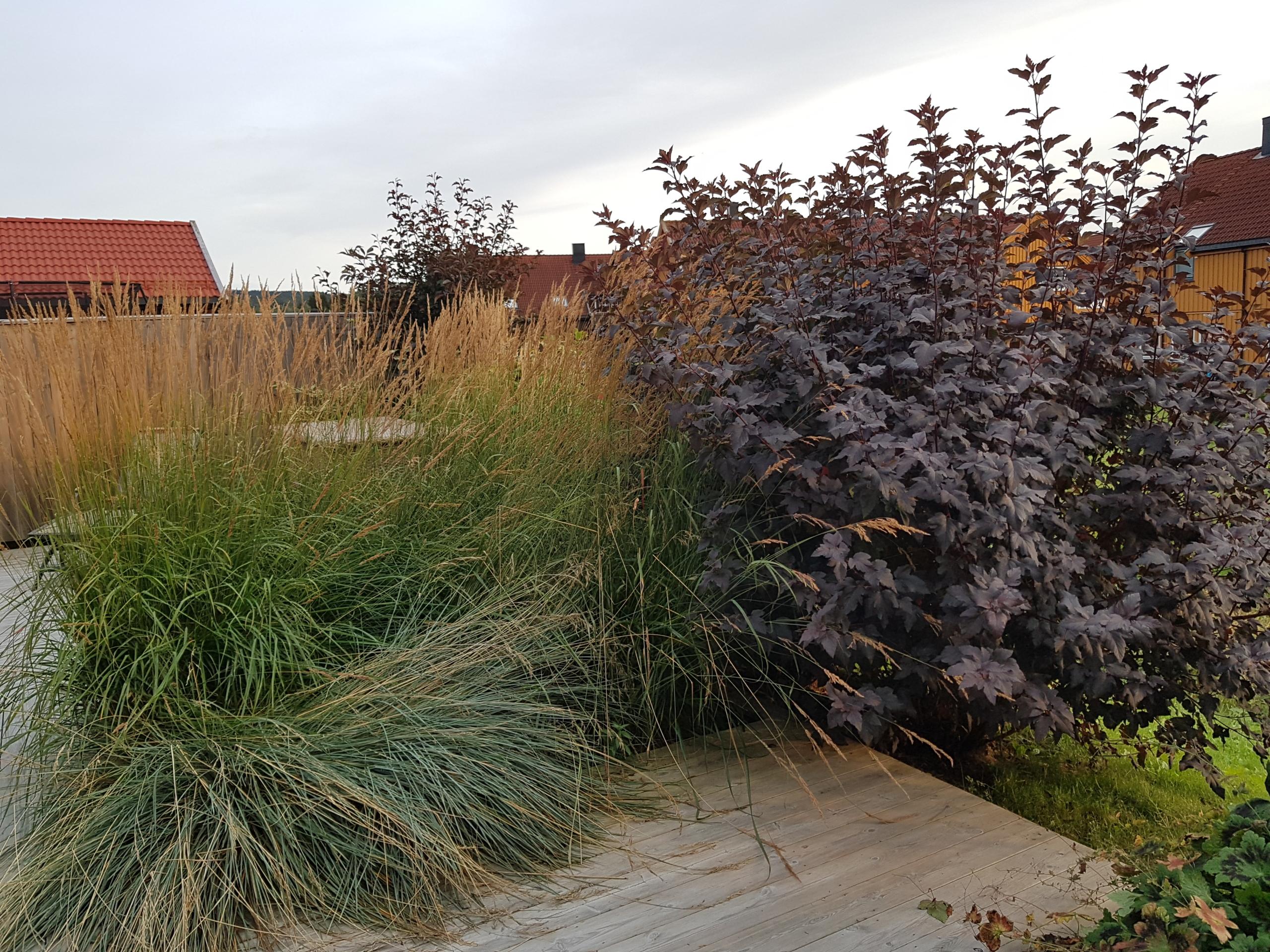 planter som skjermer innsyn til leilighet