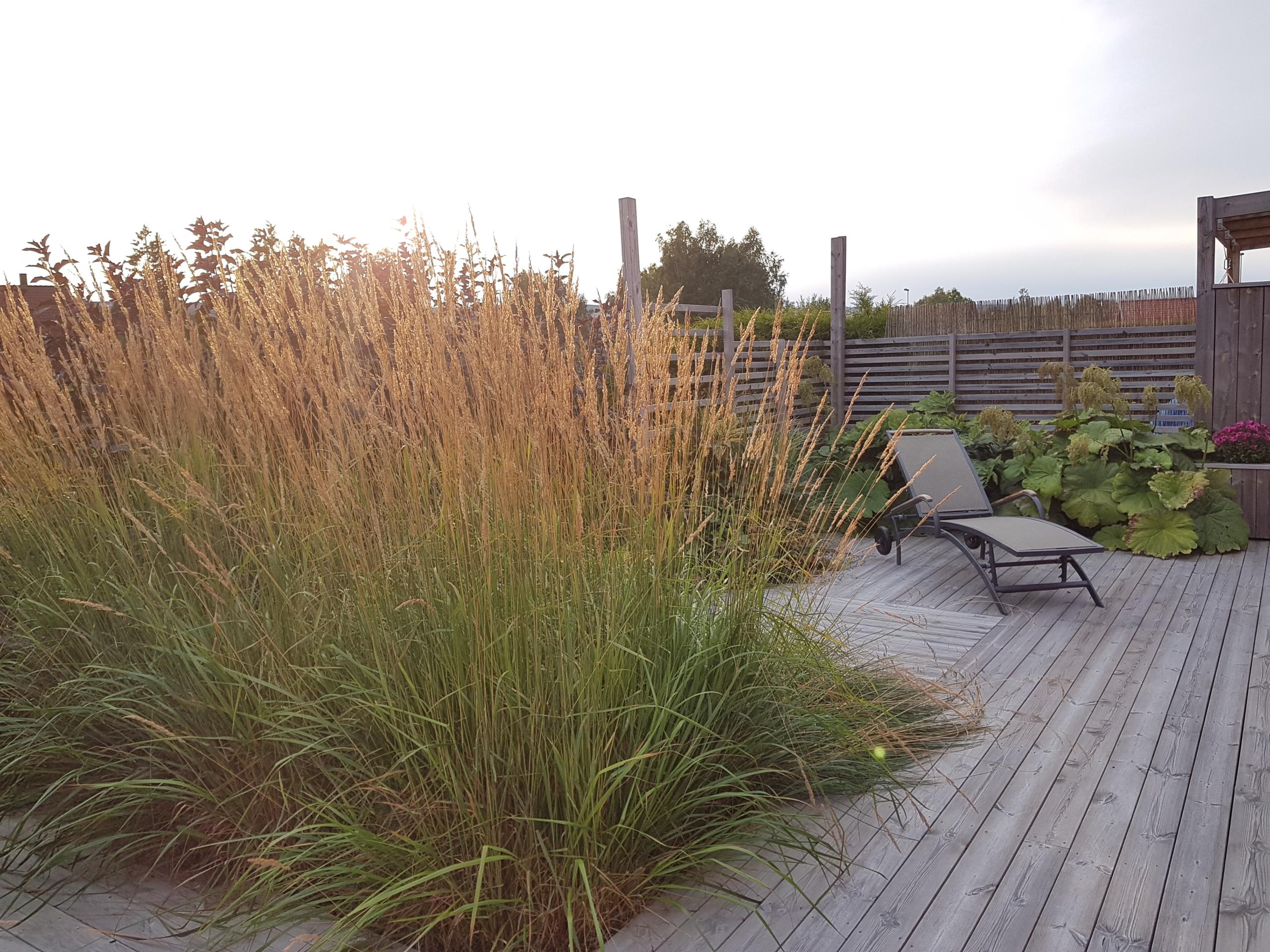 planter skjermer innsyn på terrasse